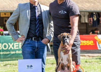SwissBoxer-DogShow-2019-©BoxerClubGVA-(399)