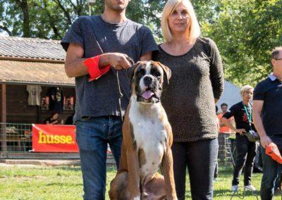 SwissBoxer-DogShow-2019-©BoxerClubGVA-(403)