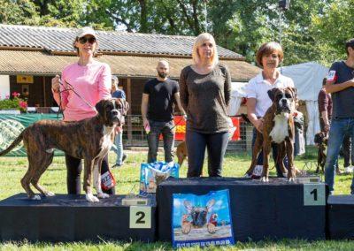 SwissBoxer-DogShow-2019-©BoxerClubGVA-(404)