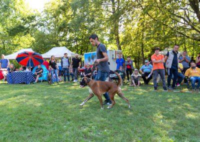 SwissBoxer-DogShow-2019-©BoxerClubGVA-(405)