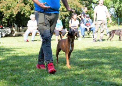 SwissBoxer-DogShow-2019-©BoxerClubGVA-(406)