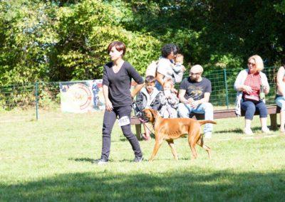 SwissBoxer-DogShow-2019-©BoxerClubGVA-(407)