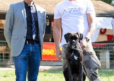 SwissBoxer-DogShow-2019-©BoxerClubGVA-(410)