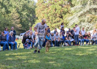 SwissBoxer-DogShow-2019-©BoxerClubGVA-(411)
