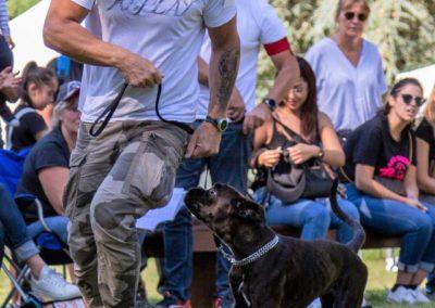 SwissBoxer-DogShow-2019-©BoxerClubGVA-(412)
