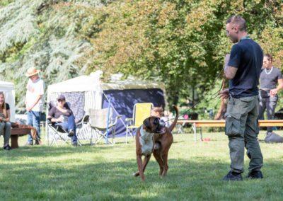 SwissBoxer-DogShow-2019-©BoxerClubGVA-(414)