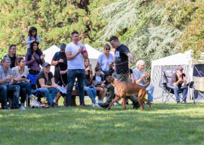 SwissBoxer-DogShow-2019-©BoxerClubGVA-(416)