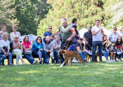 SwissBoxer-DogShow-2019-©BoxerClubGVA-(417)