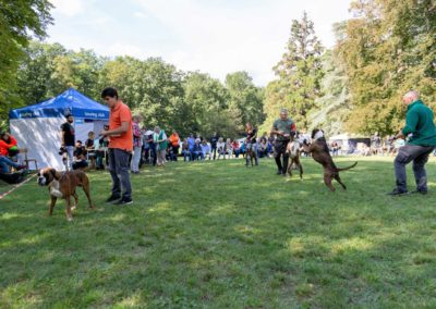 SwissBoxer-DogShow-2019-©BoxerClubGVA-(419)