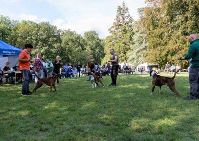 SwissBoxer-DogShow-2019-©BoxerClubGVA-(420)