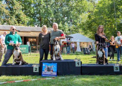 SwissBoxer-DogShow-2019-©BoxerClubGVA-(423)