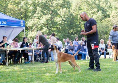SwissBoxer-DogShow-2019-©BoxerClubGVA-(424)
