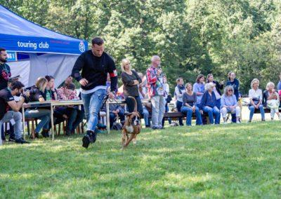 SwissBoxer-DogShow-2019-©BoxerClubGVA-(427)