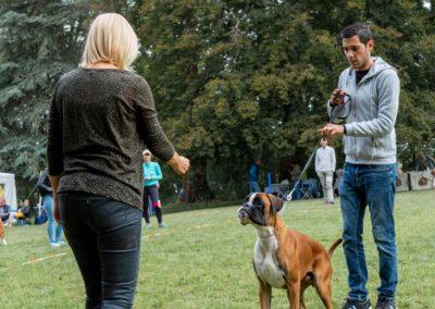 SwissBoxer-DogShow-2019-©BoxerClubGVA-(43)