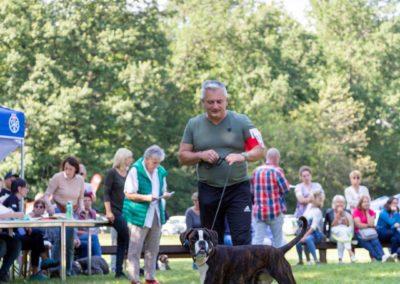 SwissBoxer-DogShow-2019-©BoxerClubGVA-(430)