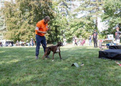 SwissBoxer-DogShow-2019-©BoxerClubGVA-(433)