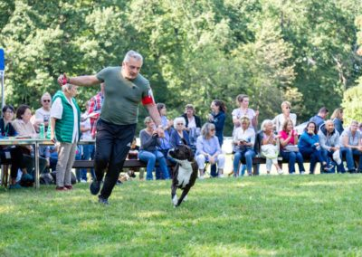 SwissBoxer-DogShow-2019-©BoxerClubGVA-(435)