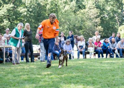 SwissBoxer-DogShow-2019-©BoxerClubGVA-(439)