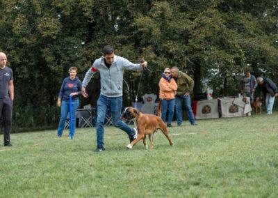 SwissBoxer-DogShow-2019-©BoxerClubGVA-(44)
