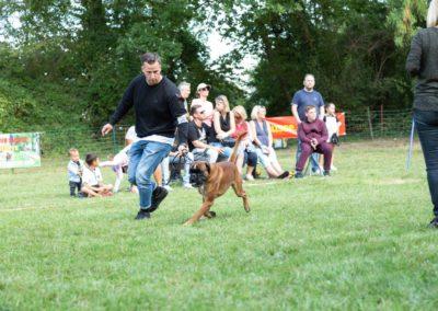 SwissBoxer-DogShow-2019-©BoxerClubGVA-(442)