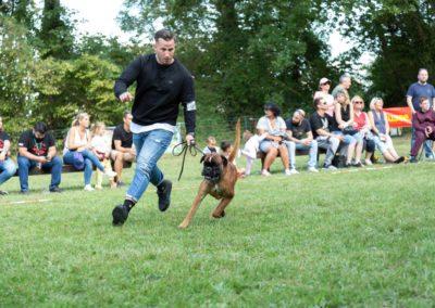 SwissBoxer-DogShow-2019-©BoxerClubGVA-(444)