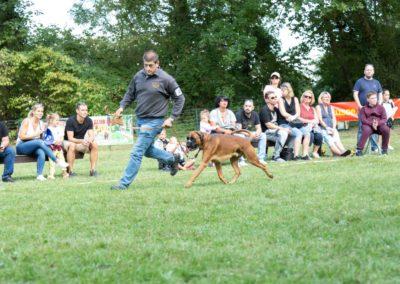 SwissBoxer-DogShow-2019-©BoxerClubGVA-(445)