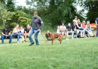 SwissBoxer-DogShow-2019-©BoxerClubGVA-(446)