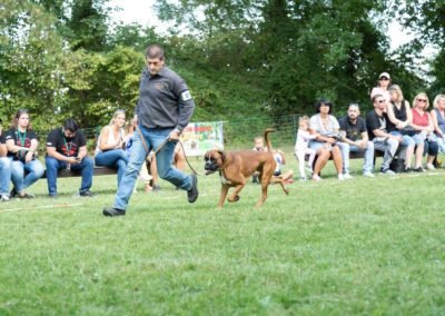 SwissBoxer-DogShow-2019-©BoxerClubGVA-(447)