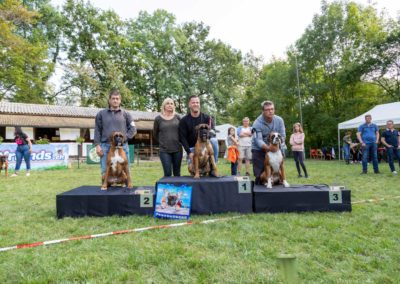 SwissBoxer-DogShow-2019-©BoxerClubGVA-(448)