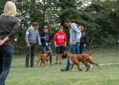 SwissBoxer-DogShow-2019-©BoxerClubGVA-(45)