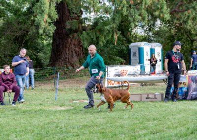 SwissBoxer-DogShow-2019-©BoxerClubGVA-(457)