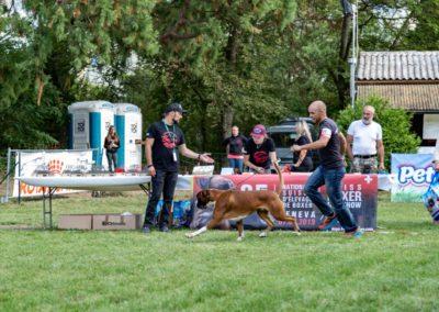 SwissBoxer-DogShow-2019-©BoxerClubGVA-(458)