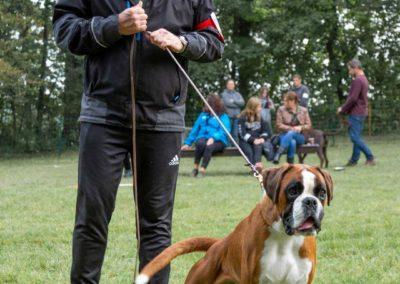 SwissBoxer-DogShow-2019-©BoxerClubGVA-(46)