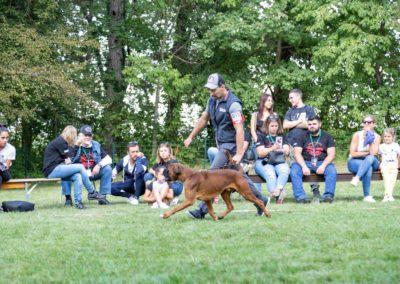 SwissBoxer-DogShow-2019-©BoxerClubGVA-(463)