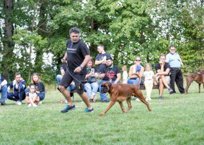 SwissBoxer-DogShow-2019-©BoxerClubGVA-(464)