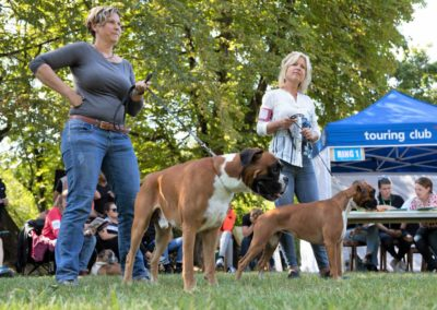 SwissBoxer-DogShow-2019-©BoxerClubGVA-(465)