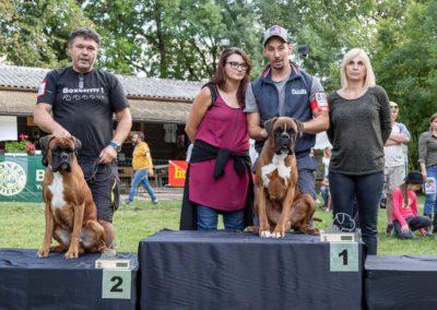 SwissBoxer-DogShow-2019-©BoxerClubGVA-(468)