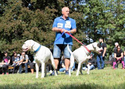 SwissBoxer-DogShow-2019-©BoxerClubGVA-(469)