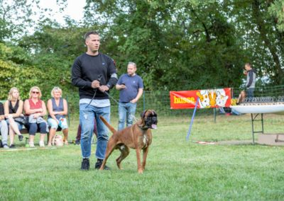 SwissBoxer-DogShow-2019-©BoxerClubGVA-(471)