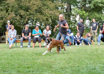 SwissBoxer-DogShow-2019-©BoxerClubGVA-(473)