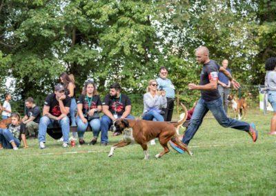 SwissBoxer-DogShow-2019-©BoxerClubGVA-(477)