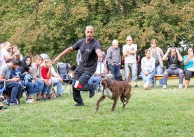 SwissBoxer-DogShow-2019-©BoxerClubGVA-(481)