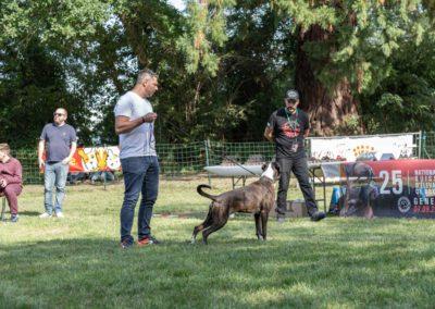SwissBoxer-DogShow-2019-©BoxerClubGVA-(485)