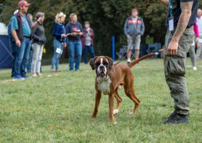 SwissBoxer-DogShow-2019-©BoxerClubGVA-(49)