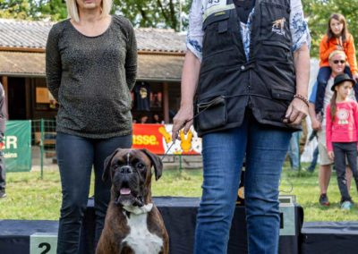 SwissBoxer-DogShow-2019-©BoxerClubGVA-(492)