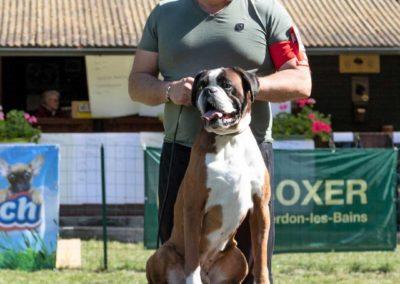 SwissBoxer-DogShow-2019-©BoxerClubGVA-(494)