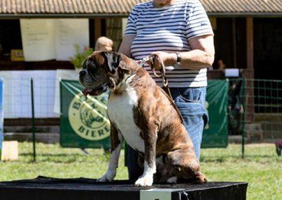 SwissBoxer-DogShow-2019-©BoxerClubGVA-(495)