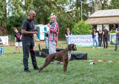 SwissBoxer-DogShow-2019-©BoxerClubGVA-(500)
