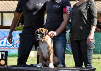 SwissBoxer-DogShow-2019-©BoxerClubGVA-(504)