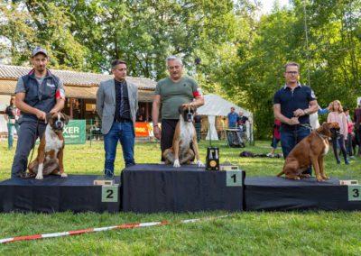 SwissBoxer-DogShow-2019-©BoxerClubGVA-(507)
